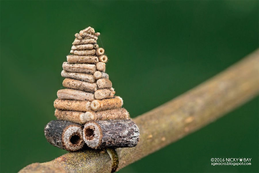 Bagworm Moth Structure