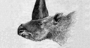 """Siberian Unicorn"" Discovery Shocks Scientists"