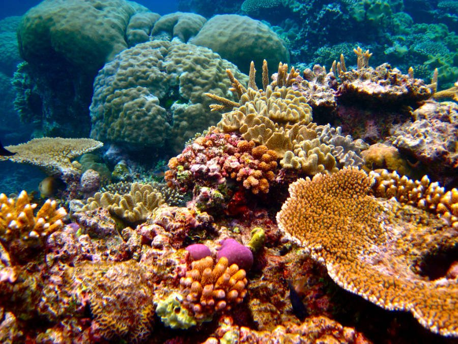Coral Reef Discovered