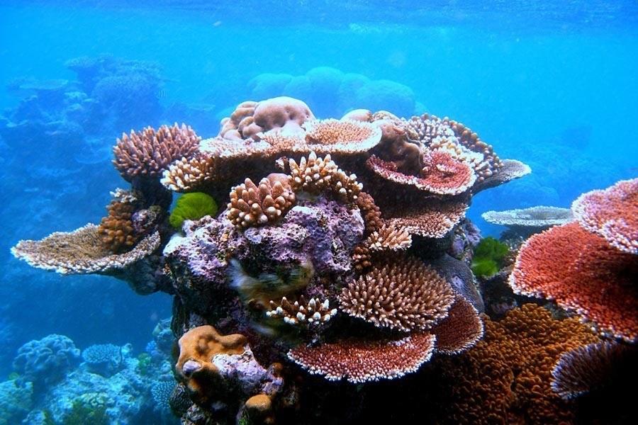 coral varieties
