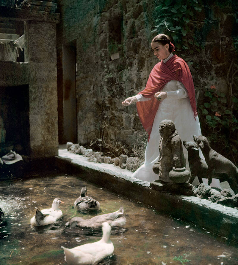 Frida And Ducks