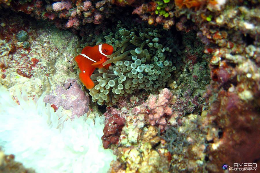 The Effects Of Coral Bleaching