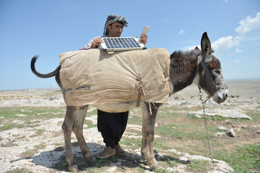 Resourceful Shepherd Charges Phone Using A Donkey