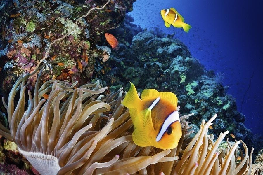 Swim Through Coral