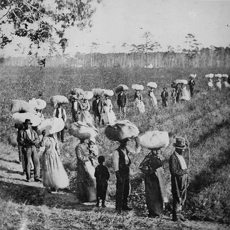 Thomas Jefferson Cotton Workers