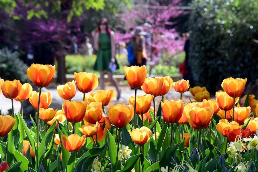 Walking People Tulips