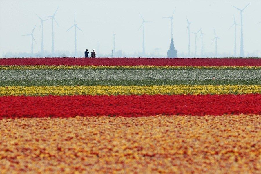 field-flowers-spring