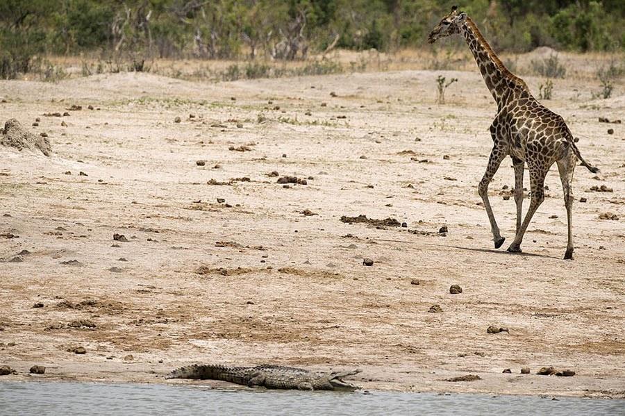 ZIMBABWE PARK HWANGE FEATURE