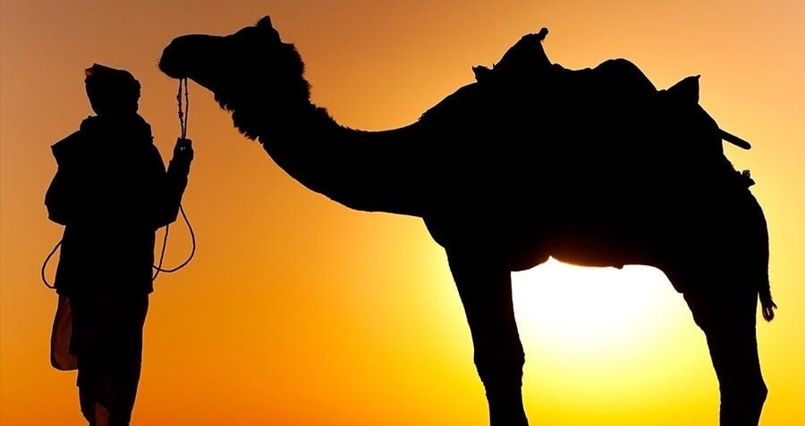 Camel Attacks Human