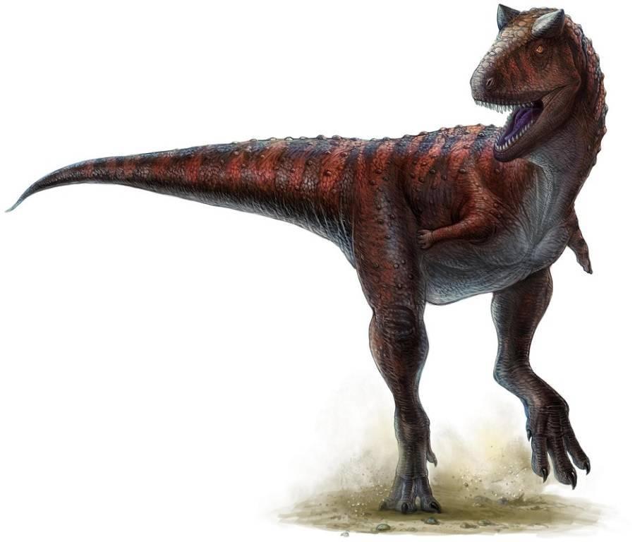 Canotaurus