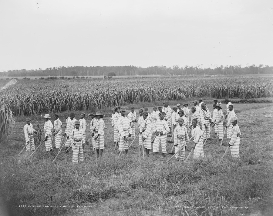 Convict Lease Workers In A Field