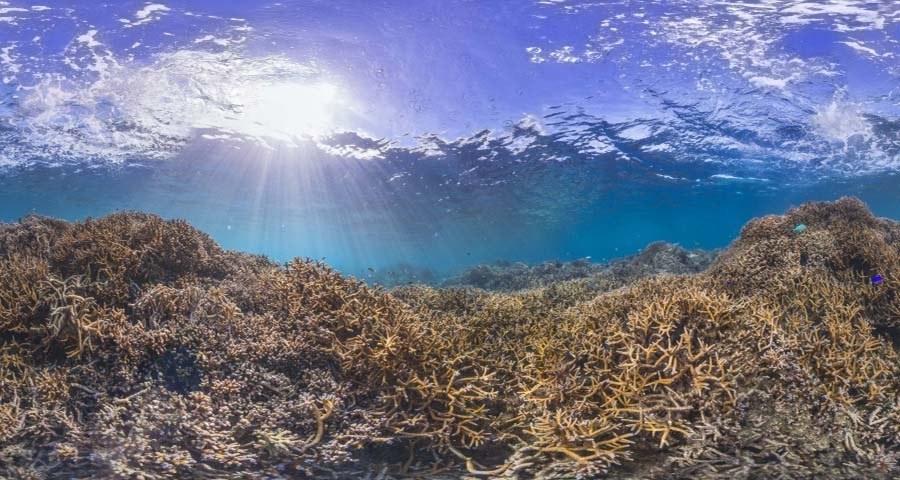 Coral Reef Bleaching Before