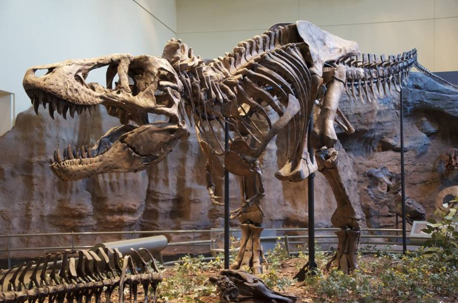 Dinosaur Facts T Rex