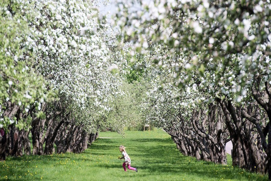 Girl Running Cherry