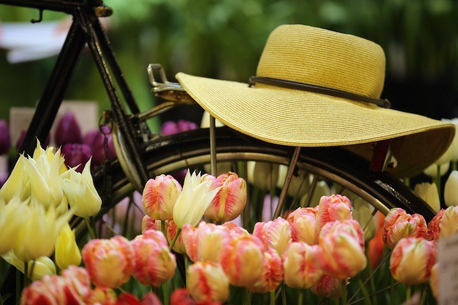 Hat Bike Flowers