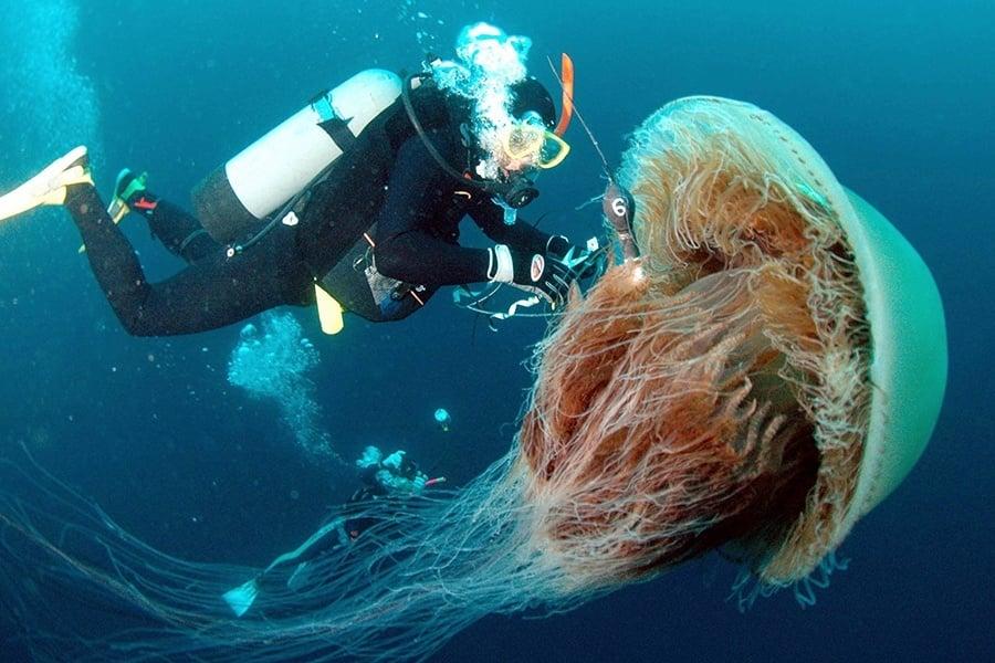A Diver Attaches A Sensor To A Large Ech