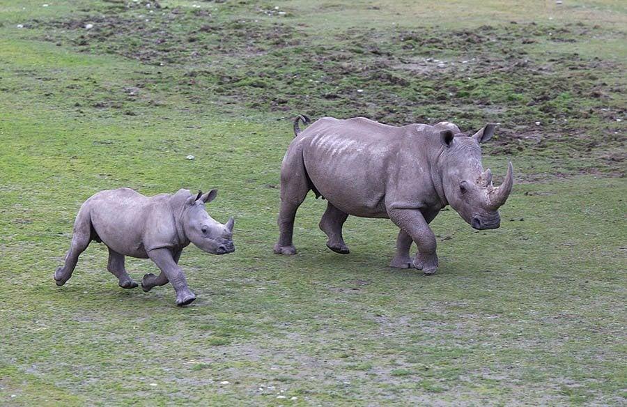 Orana Wildlife Park, Mcleans Island Road, Christchurch, New Zealand.