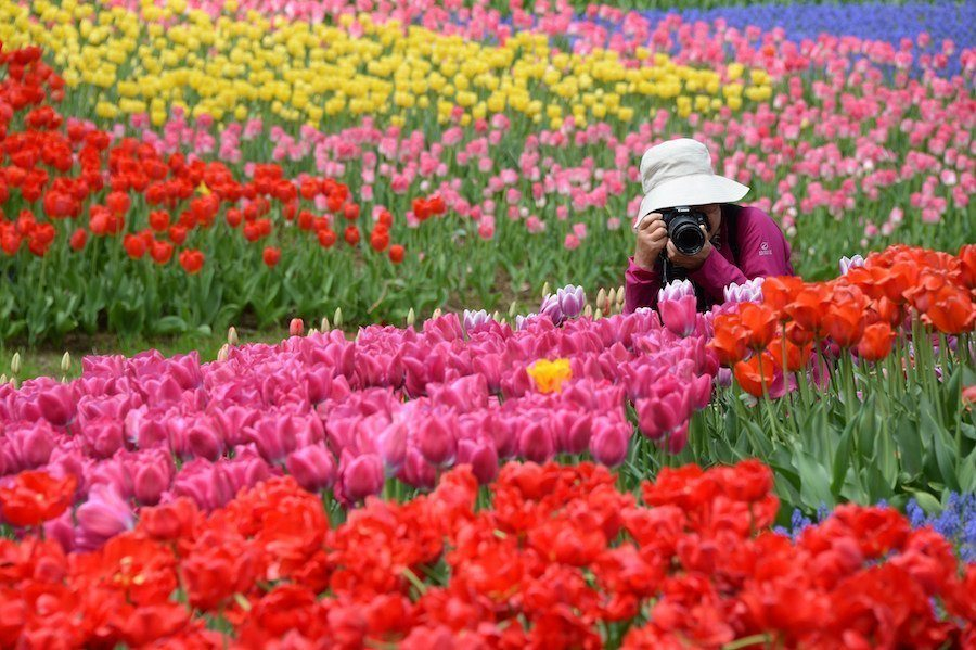 Taking Photo Flowers