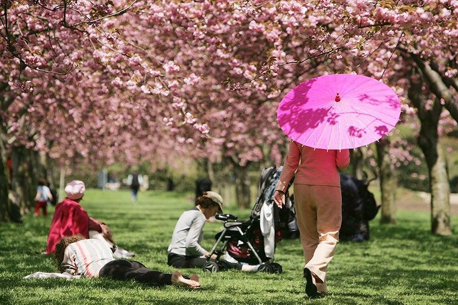 Brooklyn Botanical Garden Cherry Blossom Festival