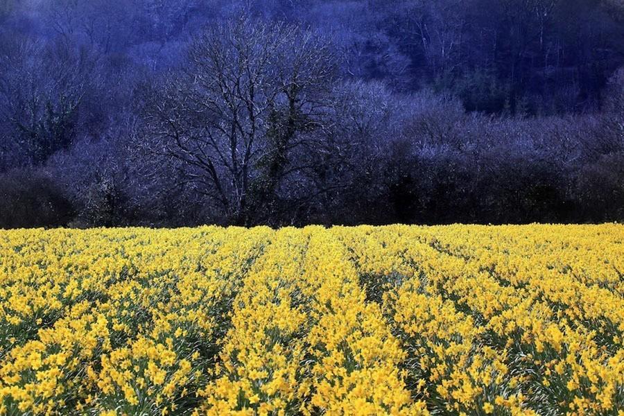 Yellow Against Dark Blue