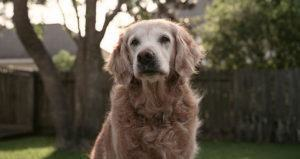 Last Known 9/11 Rescue Dog Laid To Rest