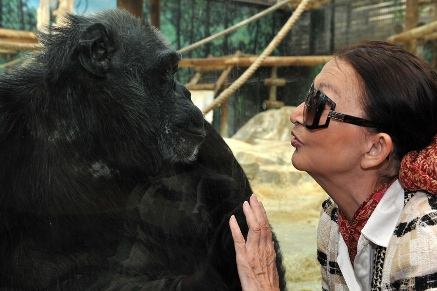 Chimp Woman Kiss
