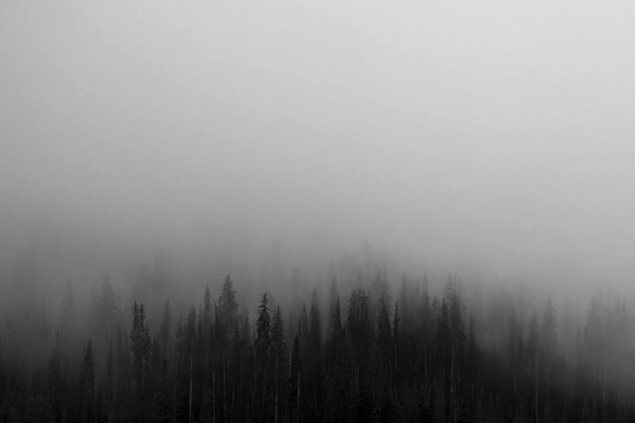 Foggy Spruce