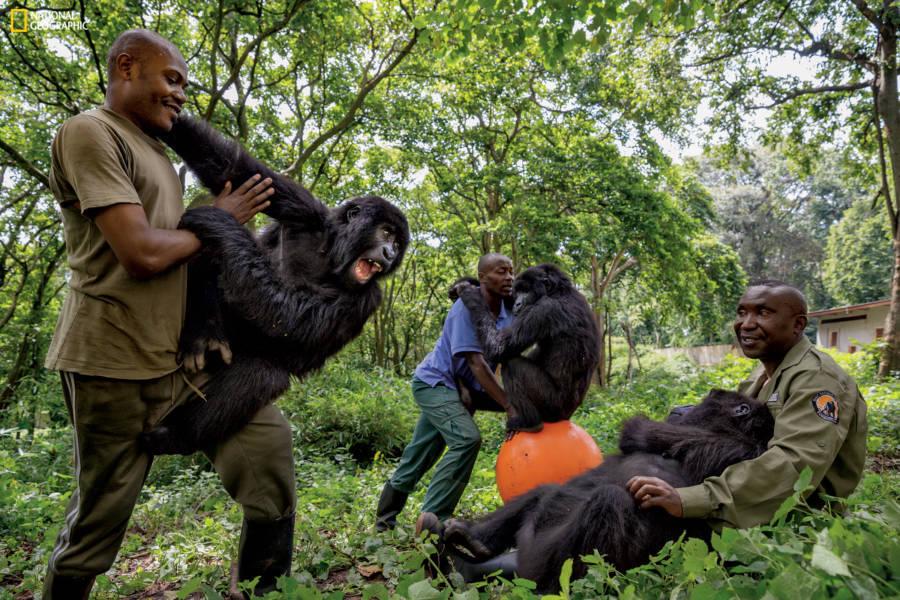 Gorillas Rangers