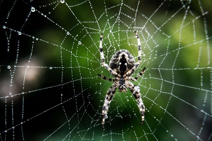 Spider Web Water