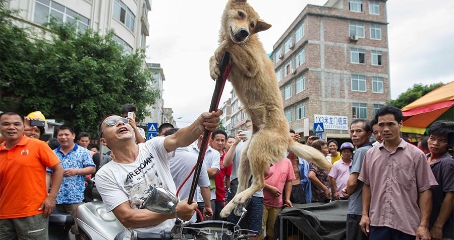 Yulin Festival Dog Meat