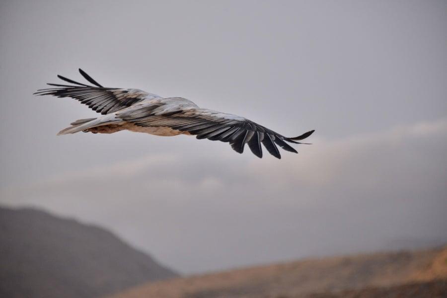 Bird Feathers Flying