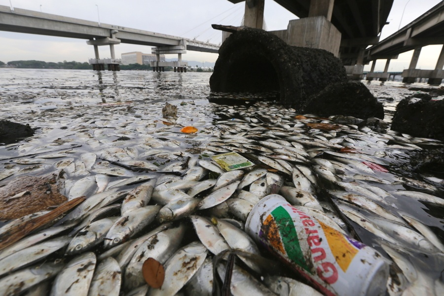 Dead Fish Trash