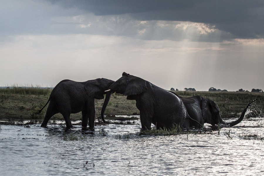 Elephants Water Hole