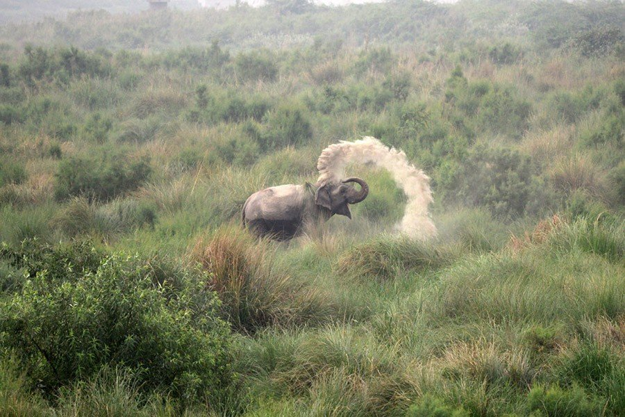 Elephant Sunscreen