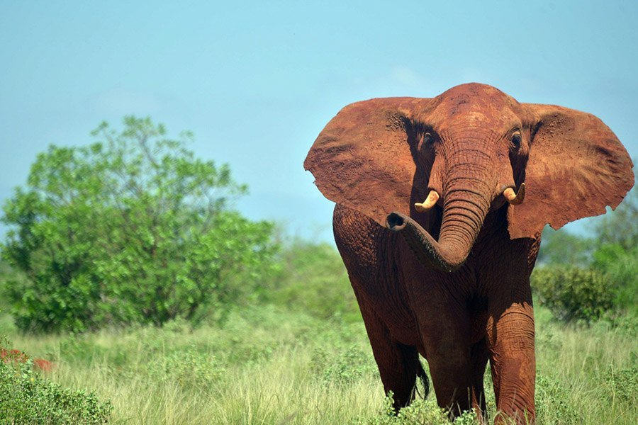 Interesting Elephant Facts