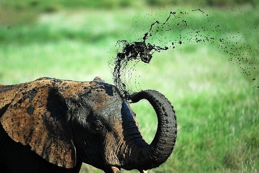 Skincare Regimen Elephant Facts