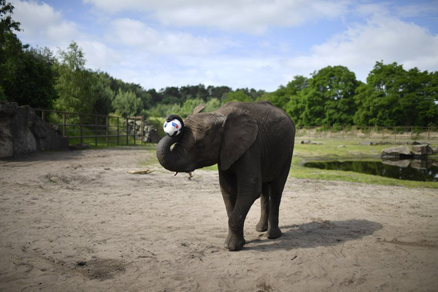 Elephant Trunk Trivia
