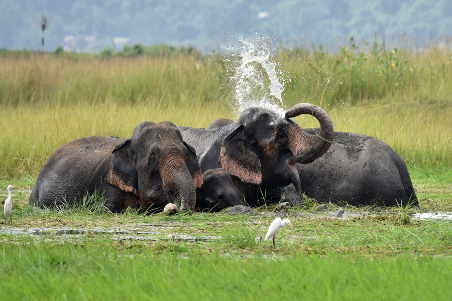 Elephants Sense Of Smell