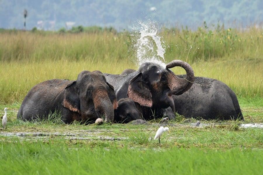 Elephants Sense Of Smell