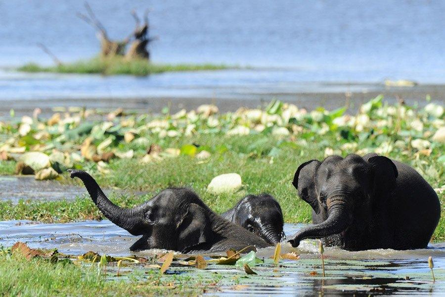 Elephants Cooling Down