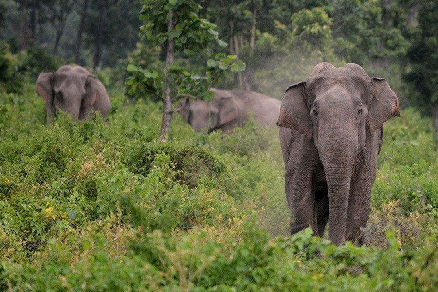 Elephants Self-Awareness