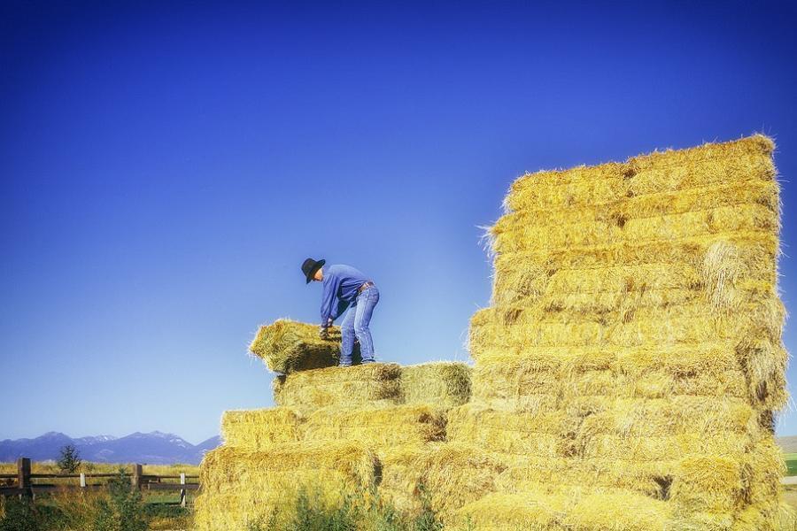 Gop Changes Farmer Hay