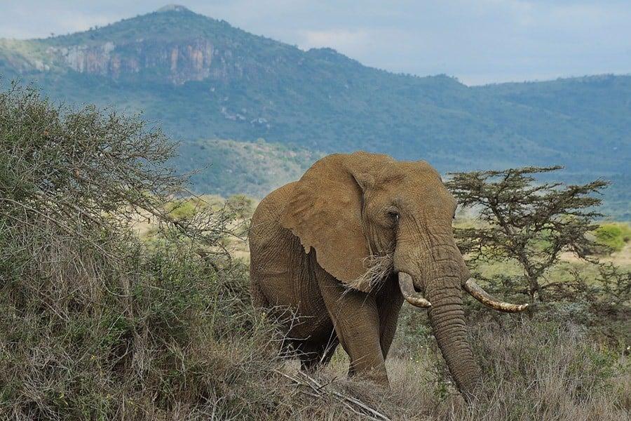 Elephants In Hinduism