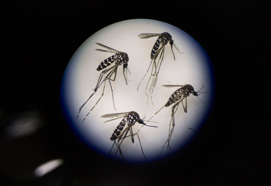 Mosquito Microscope
