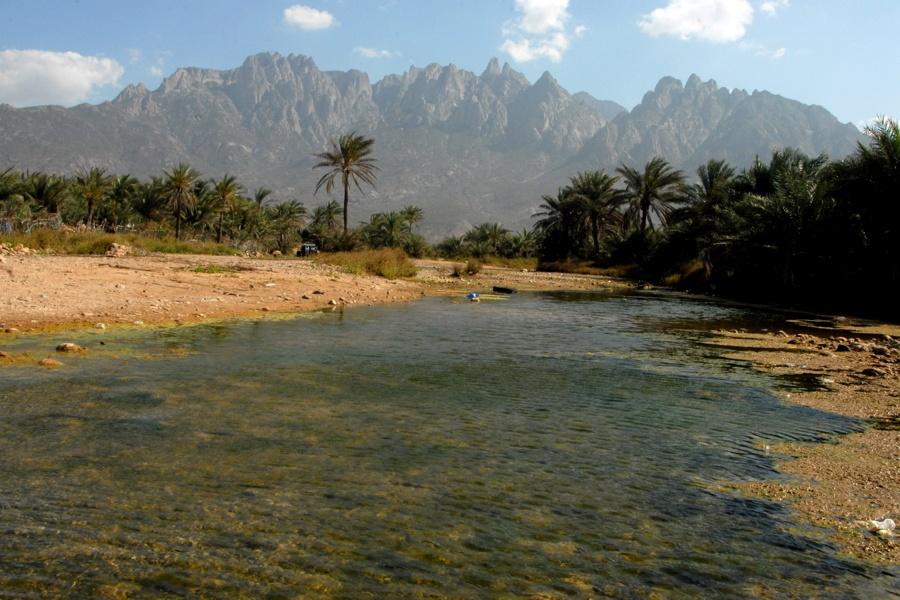 Palm Tree Stream