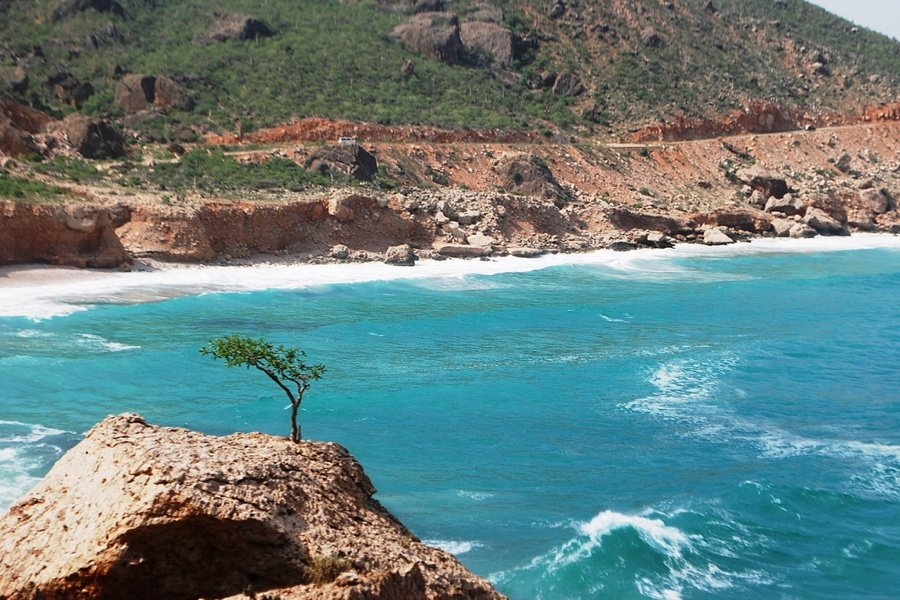 Socotra Island Tree Turquoise Water