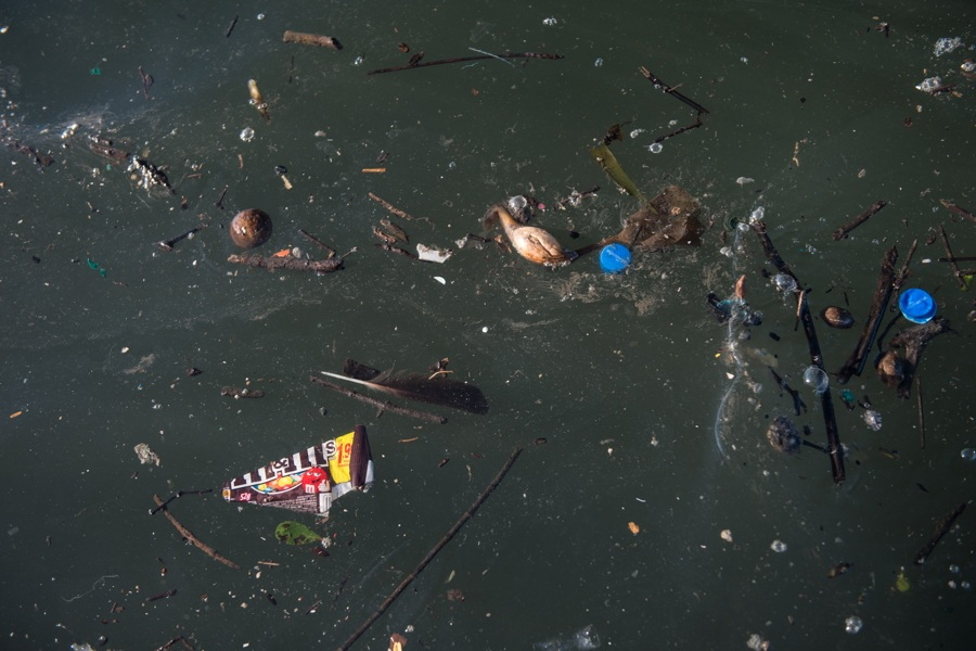 Sticks Trash In Water
