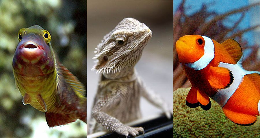 Hermaphrodotism In Nature 10 Animals That Can Be Both Male And Female-7084