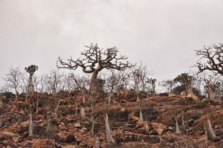 Trees Rocks