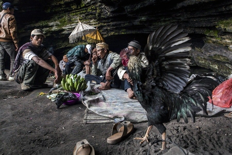 Fowl With Shamans
